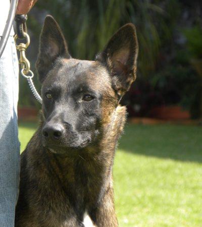 Por una prioridad de salud pública, buscan reactivar en Chetumal el Centro de Atención Canina