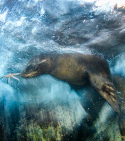 Gana cancunense el premio al Mejor Fotógrafo de Vida Silvestre 2016