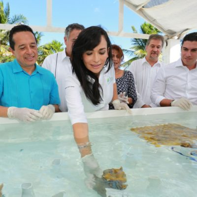 Celebra Laura Fernández el inicio del programa de restauración de arrecifes de coral en Puerto Morelos
