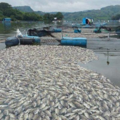 Aparecen muertos miles de peces en el río Grijalva