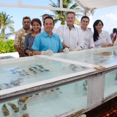 Arranca en Puerto Morelos programa de siembra de corales para el repoblamiento del arrecife mesoamericano