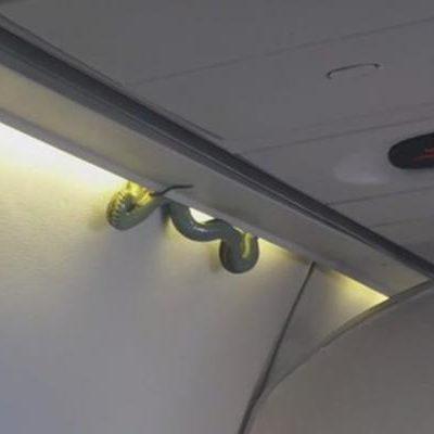 ¡TREMENDO CULEBRÓN EN AEROMÉXICO!: Indaga aerolínea cómo subió una serpiente a un vuelo en la ruta Torreón-CDMX