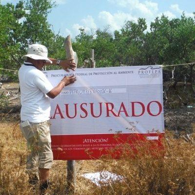 Clausura Profepa predio en la reserva de Yum Balam por remoción de mangle