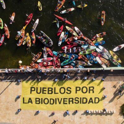 """""""EL DIÁLOGO POLÍTICO HA FALLADO"""": Greenpeace y otras ONG's llaman a líderes reunidos en la COP 13 de Cancún a proteger la biodiversidad"""