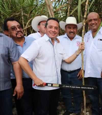 ARRANCA LA ZAFRA EN EL SUR DE QR: Da Gobernador el machetazo inicial para cosechar un millón 300 mil toneladas de caña