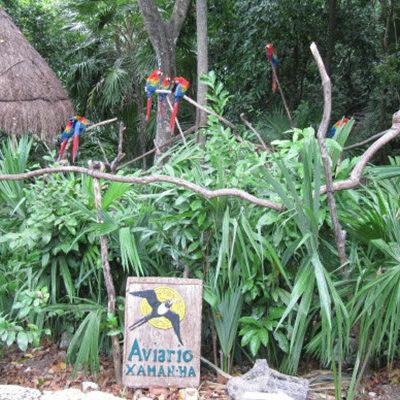 DESAPARECE EL AVIARIO XAMAN-HÁ EN PLAYA DEL CARMEN: Talan el predio donde por más de 20 años habitaron decenas de aves exóticas