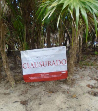 Clausura Profepa predio costero en Mahahual por remoción de Palma chit