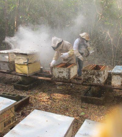 Advierten apicultores contaminación del manto acuífero en la península de Yucatán