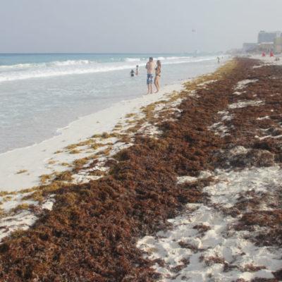 Analizan estrategias para enfrentar posible nueva oleada de sargazo a costas de Cancún