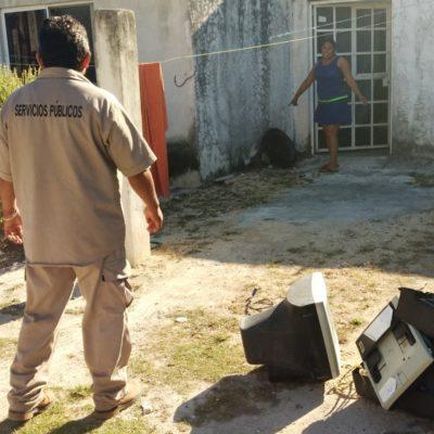 Lanzan campaña para combatir las enfermedades transmitidas por vector en Puerto Morelos