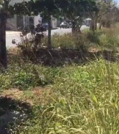 LA OTRA CARA DE CANCÚN: Camellón central de la SM 200, en el abandono