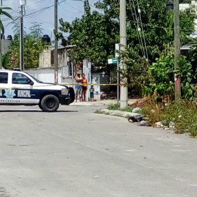Y VIERON A UNOS PERROS COMIENDO CARNE CRUDA: Hallan el brazo de una persona en la Región 259, donde el lunes encontraron restos de descuartizado