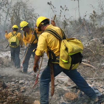 Consume incendio 100 hectáreas de vegetación arbustiva en Bacalar
