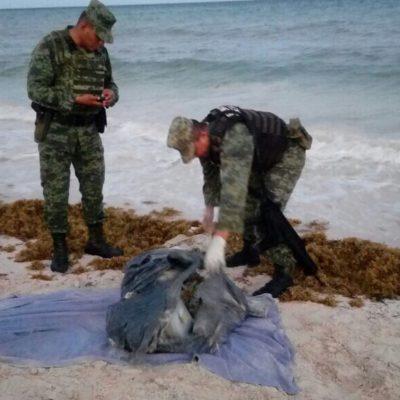 Recalan 25 kilos de cocaína en playa de Puerto Morelos