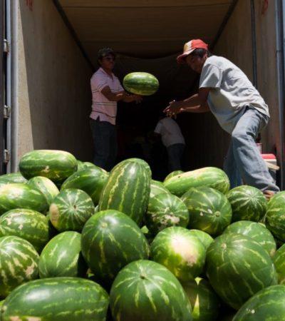 Productores de JMM logran apoyo para vender hasta 900 toneladas de sandía al sector hotelero y restaurantero de la Riviera Maya