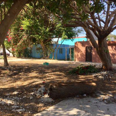 Atienden denuncia de basurero clandestino en la SM 24 de Cancún