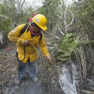 Activos, 3 incendios forestales; 11 han sido sofocados en la actual temporada