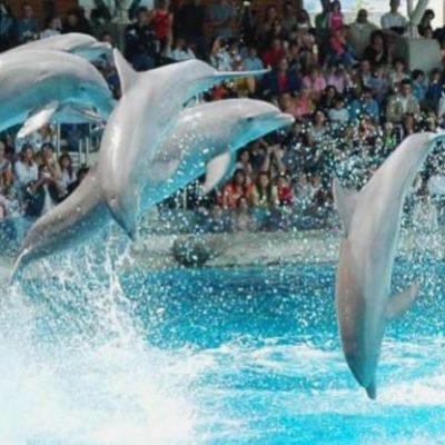 """Prohibir delfinarios, """"iniciativa caprichosa de un partido político"""", dice empresario de Delphinus, Francisco Córdova"""
