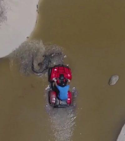 Causa indignación video de joven extranjero atropellando a un cocodrilo con una cautrimoto en área natural protegida de Cozumel