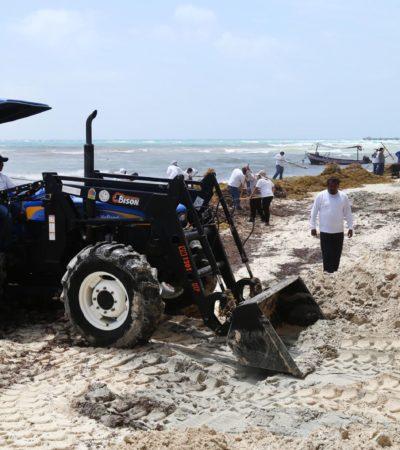 A unos días de la Semana Santa, redoblan limpieza de playas por recale de sargazo en la Riviera Maya