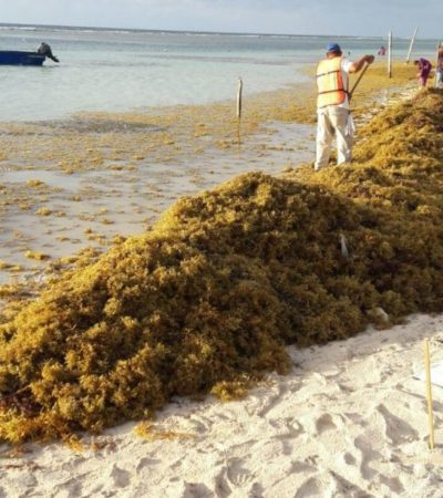 FOTOS | Retiran toneladas de sargazo de playas de Mahahual e Xcalak