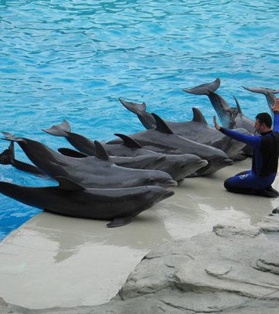 La iniciativa para cerrar delfinarios del PVEM es dañina para Quintana Roo: 'Chanito' Toledo