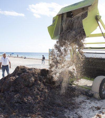Retiran 20 toneladas de sargazo cada día en playas de Puerto Morelos