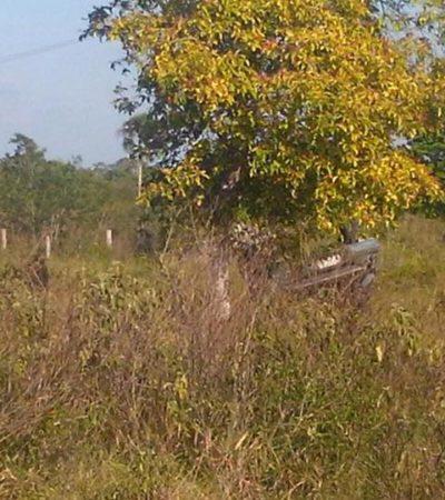 FATAL VOLCADURA EN EL SUR DE QR: Saldo de dos muertos y dos heridos en accidente en la carretera Cafetal-Mahahual