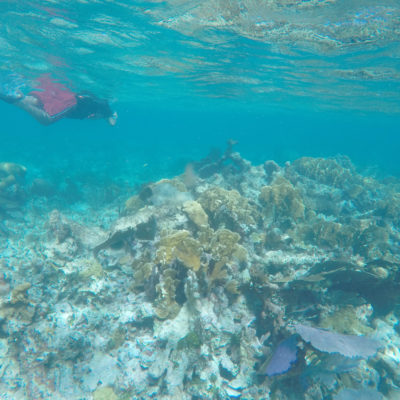 En carrera contra el tiempo, buscan proteger arrecifes del Caribe mexicano