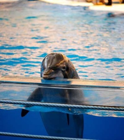 Prevén resolución sobre delfinarios hasta septiembre