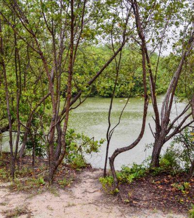 Presenta Laura Fernández a Semarnat proyecto para rehabilitar flujo lagunar de Puerto Morelos