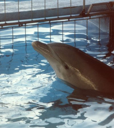 Inicia delfinario estudios de interacción con mamíferos marinos