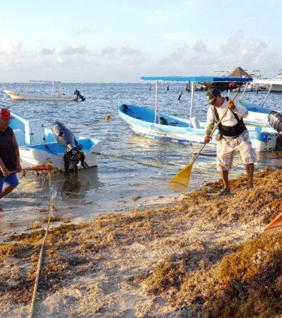 Sigue limpieza de playas ante recale de sargazo en Puerto Morelos