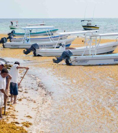 Activan plan emergente para afrontar arribo masivo de sargazo en Puerto Morelos