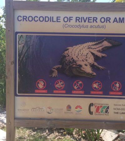 Confirman que turista atacado por un cocodrilo en Cancún perdió el brazo