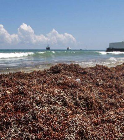 GALERÍA | Recala sargazo en el malecón de Cozumel