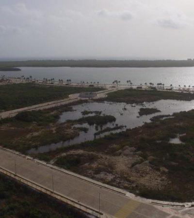 LOGRAN AMBIENTALISTAS NUEVO AMPARO POR TAJAMAR: Confían en ganar la conservación del codiciado polígono de manglar en Cancún