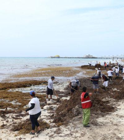 Ante recale de sargazo y basura tras el paso de la tormenta 'Franklin', refuerzan limpieza de playas en Solidaridad