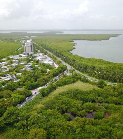RIU RIVIERA CANCÚN, ¿EL ECOCIDIO QUE VIENE?: Mantienen en la mira proyecto de hotel que se planea construir en zona de humedales   VIDEO