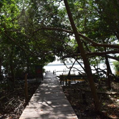 Las comunidades indígenas, custodias de los bosques y la biodiversidad*