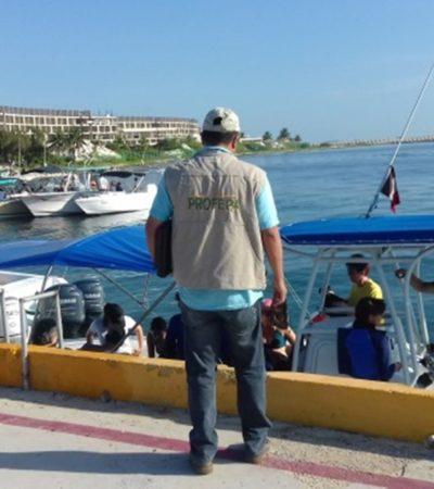Dan 'receso' a tiburón ballena en Quintana Roo