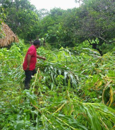 Provoca 'Franklin' daños en cultivos de maiz y cortes de energía eléctrica en comunidades rurales de JMM