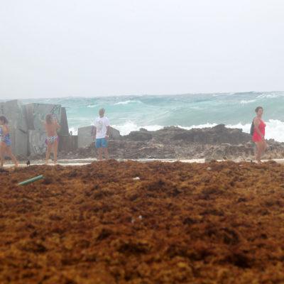 ARRASTRA 'FRANKLIN' SARGAZO HASTA CANCÚN: Aumenta recale del alga en las playas tras el paso de la tormenta tropical | GALERÍA