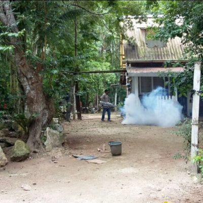 Refuerzan en Puerto Morelos acciones para combatir enfermedades transmitidas por vector