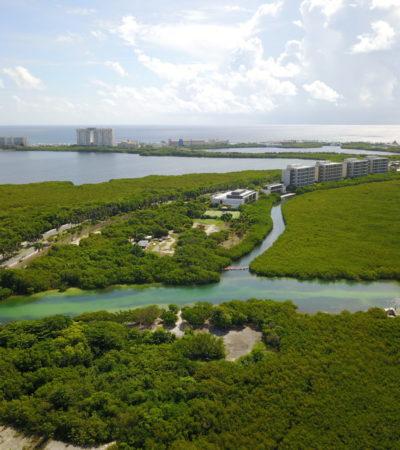 VORACIDAD DE DESARROLLADORES EN CANCÚN: Protestan contra devastación de manglar en Punta Nizuc ante pasividad de autoridades