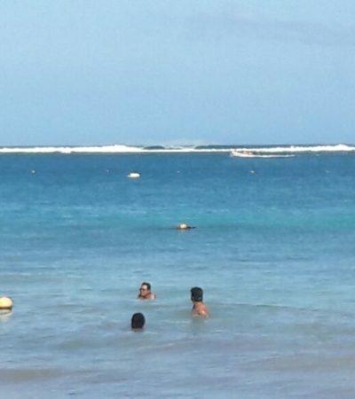 Actividades normales a pesar de alerta de 'mar de fondo' en Puerto Morelos