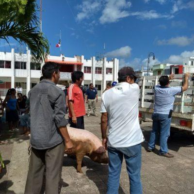 Manifestantes cocinan un puerco frente al Palacio Municipal en Felipe Carrillo Puerto