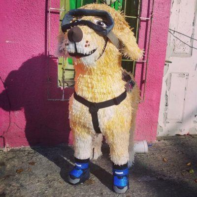 'FRIDA', LA PERRITA RESCATISTA, SENSACIÓN DE MÉXICO: Crean piñata en homenaje al can de la Marina que ha participado en 52 rescates