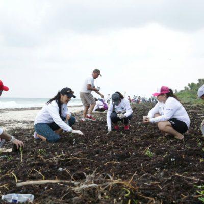 Limpieza de costas suma a 500 voluntarios en Tulum