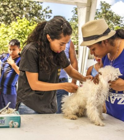 Realiza jornada de reforzamiento de vacunación antirrábica en Puerto Morelos